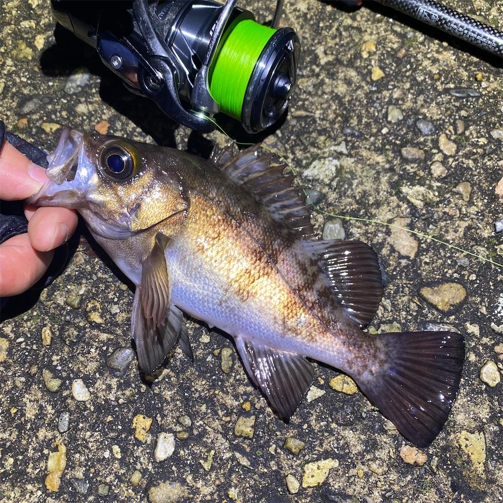 f:id:yu-kin-fishing:20200324170528j:image
