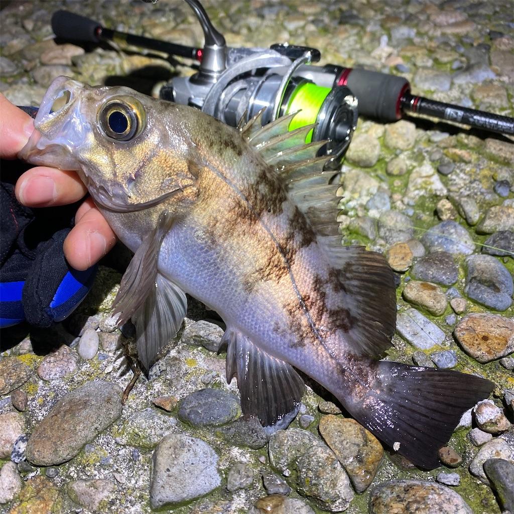 f:id:yu-kin-fishing:20200329235835j:image