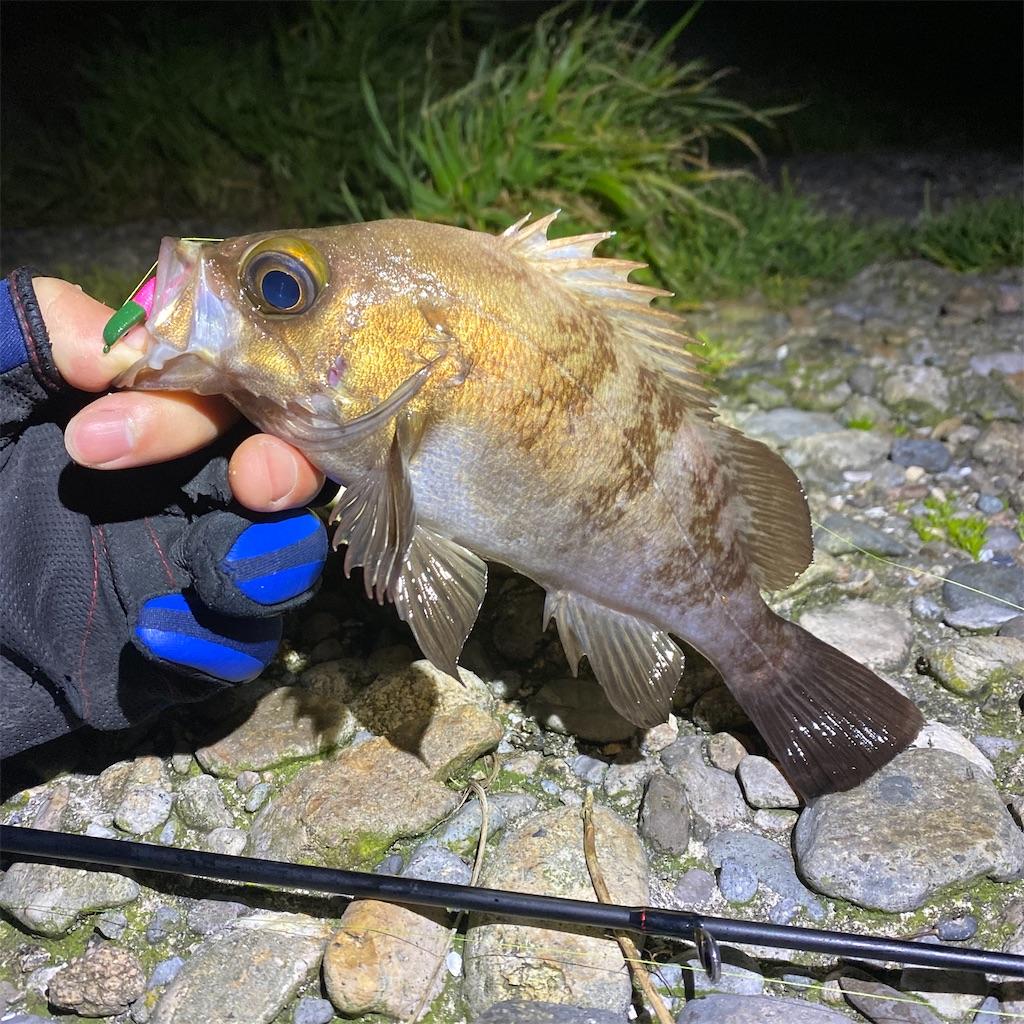 f:id:yu-kin-fishing:20200330000100j:image