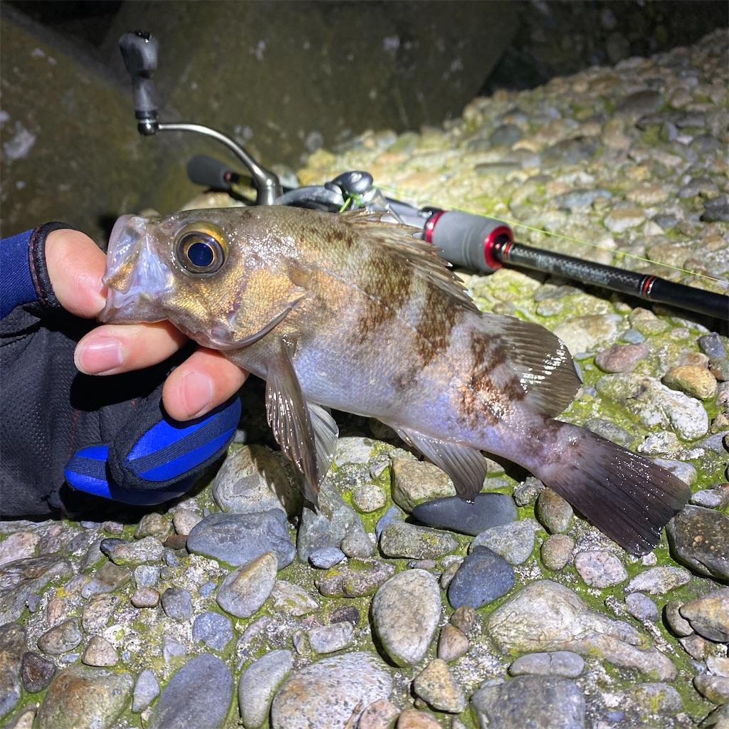 f:id:yu-kin-fishing:20200330000152j:image