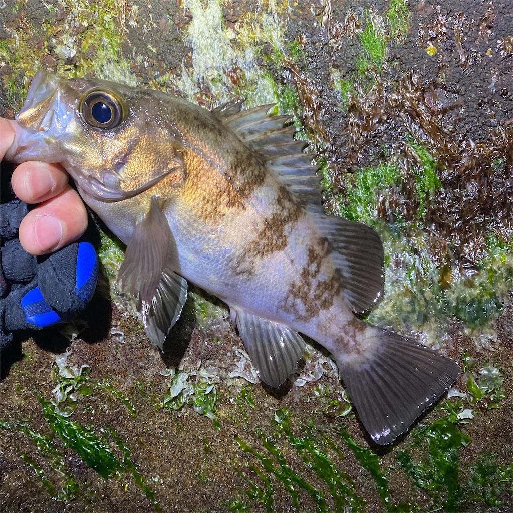 f:id:yu-kin-fishing:20200330000352j:image