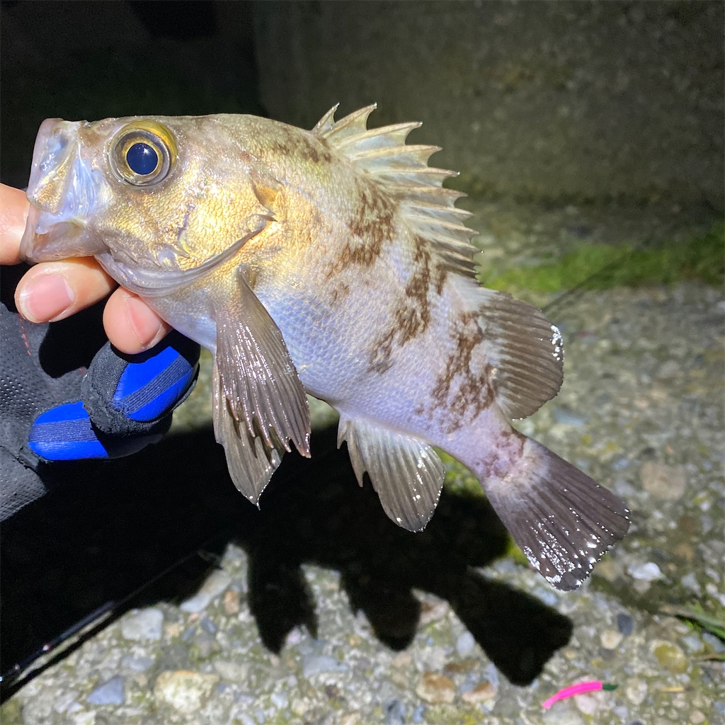 f:id:yu-kin-fishing:20200330000420j:image