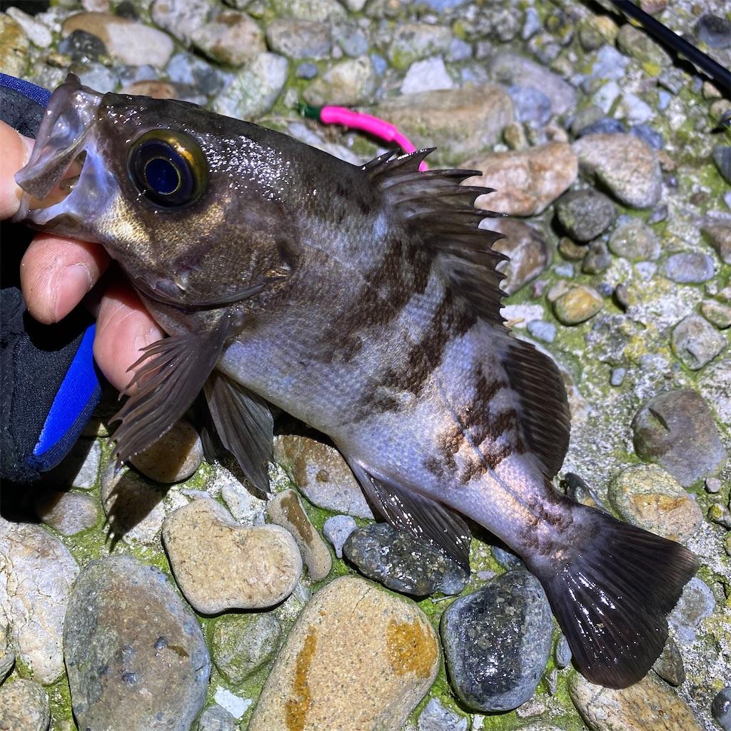 f:id:yu-kin-fishing:20200401124620j:image