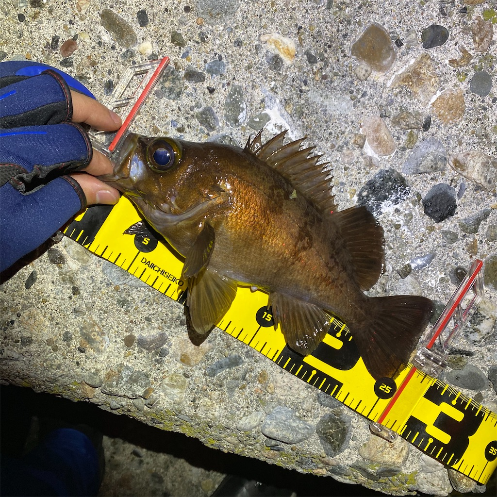 f:id:yu-kin-fishing:20200401125913j:image