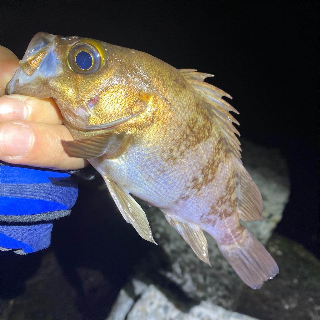 f:id:yu-kin-fishing:20200401184617j:image