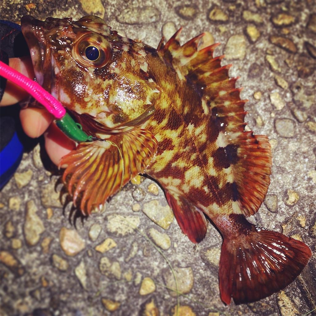f:id:yu-kin-fishing:20200403223411j:image