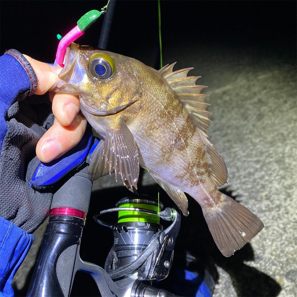 f:id:yu-kin-fishing:20200407092235j:image