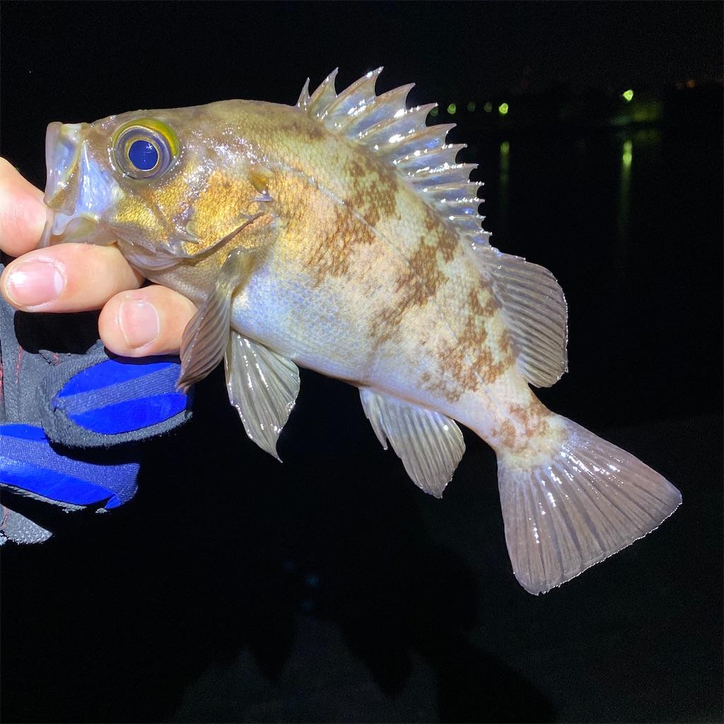 f:id:yu-kin-fishing:20200407092951j:image