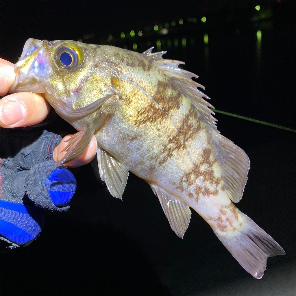 f:id:yu-kin-fishing:20200407093143j:image
