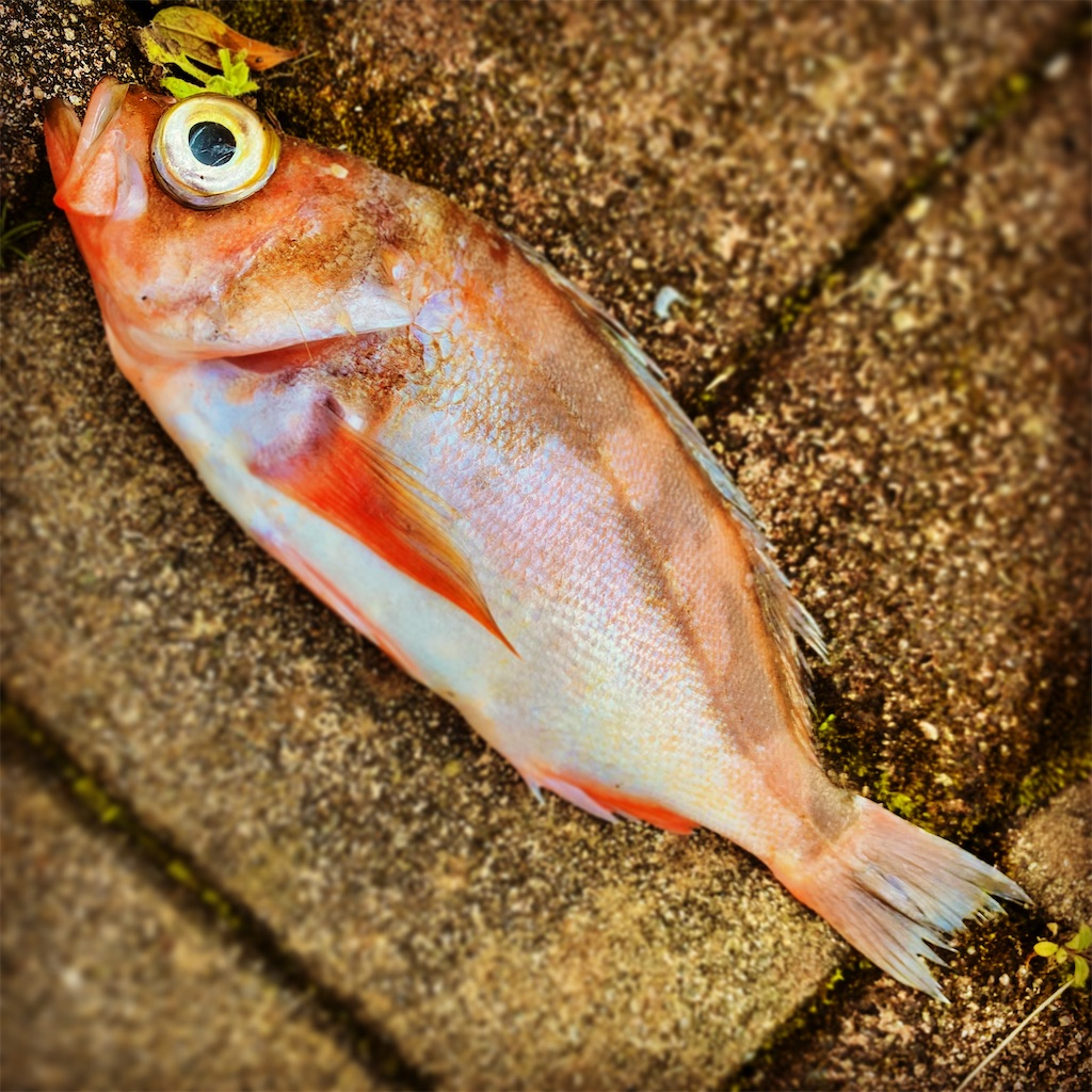 f:id:yu-kin-fishing:20200428124312j:image