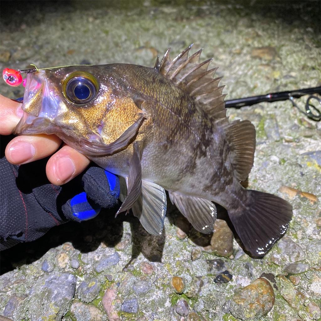 f:id:yu-kin-fishing:20200520201609j:image