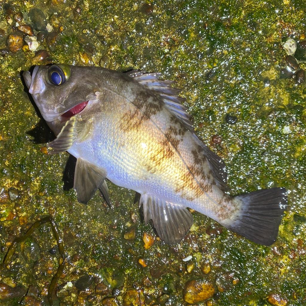 f:id:yu-kin-fishing:20200520201843j:image