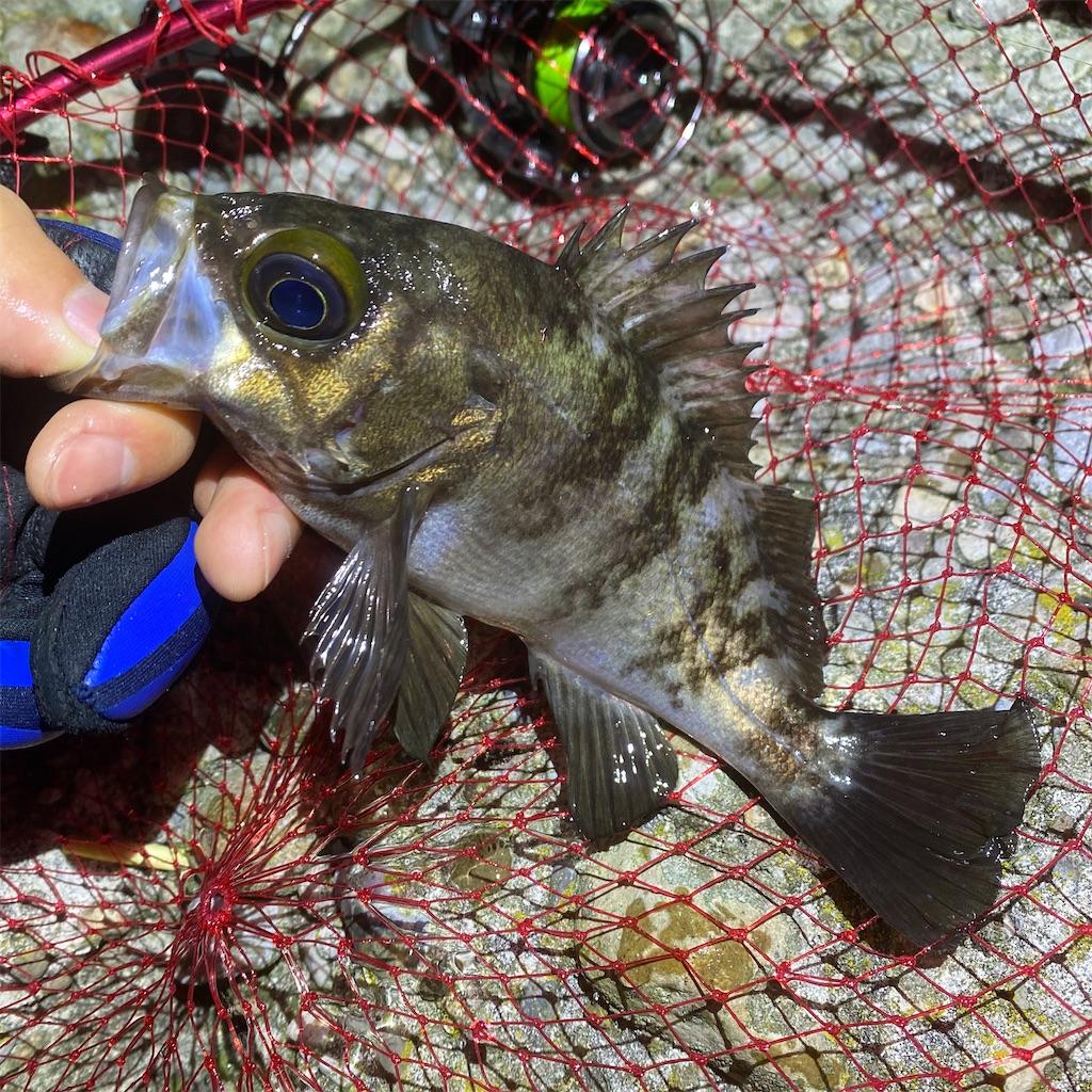 f:id:yu-kin-fishing:20200520201847j:image