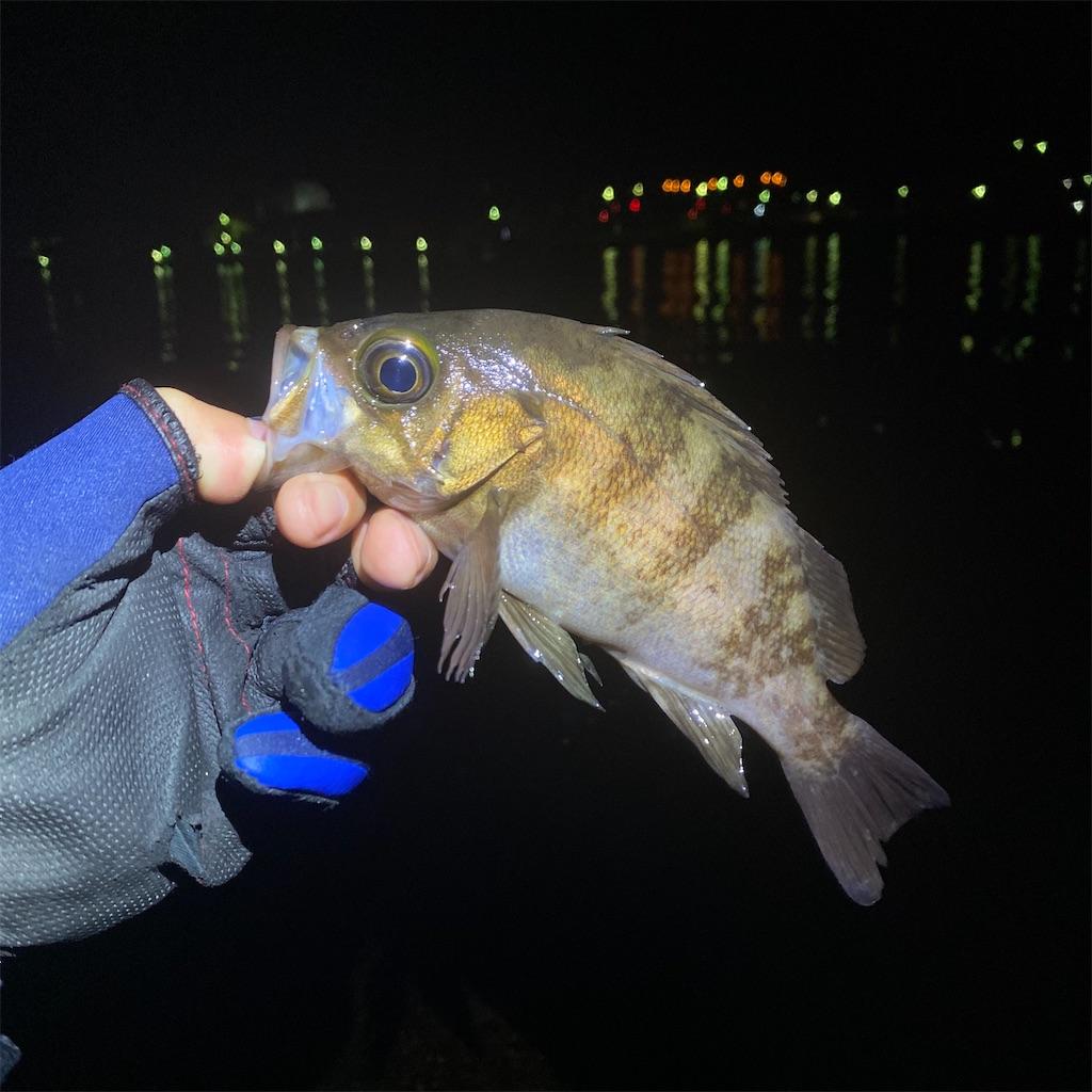 f:id:yu-kin-fishing:20200520201855j:image