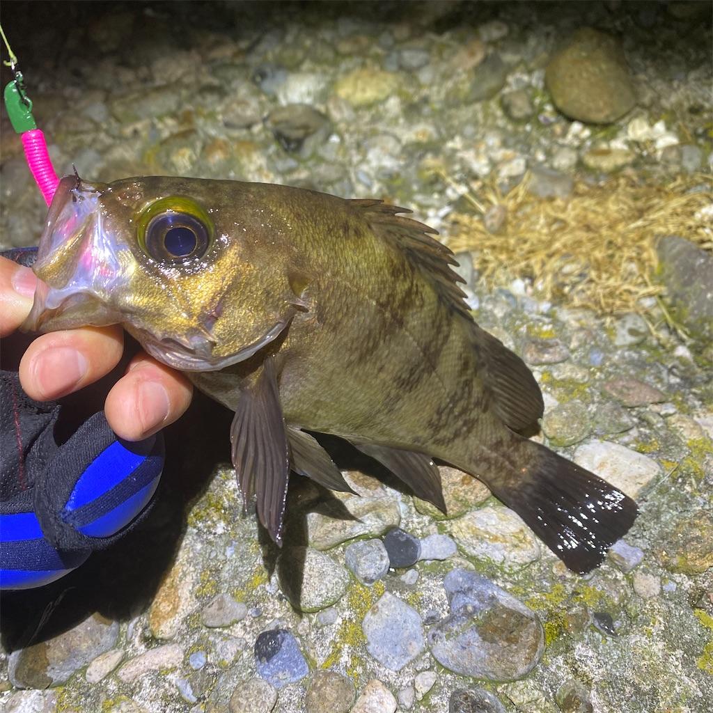 f:id:yu-kin-fishing:20200520201859j:image