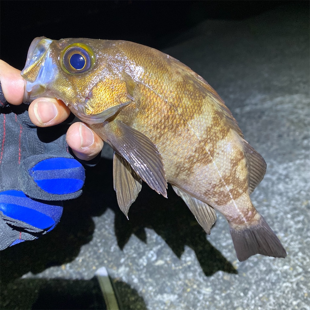f:id:yu-kin-fishing:20200531100725j:image