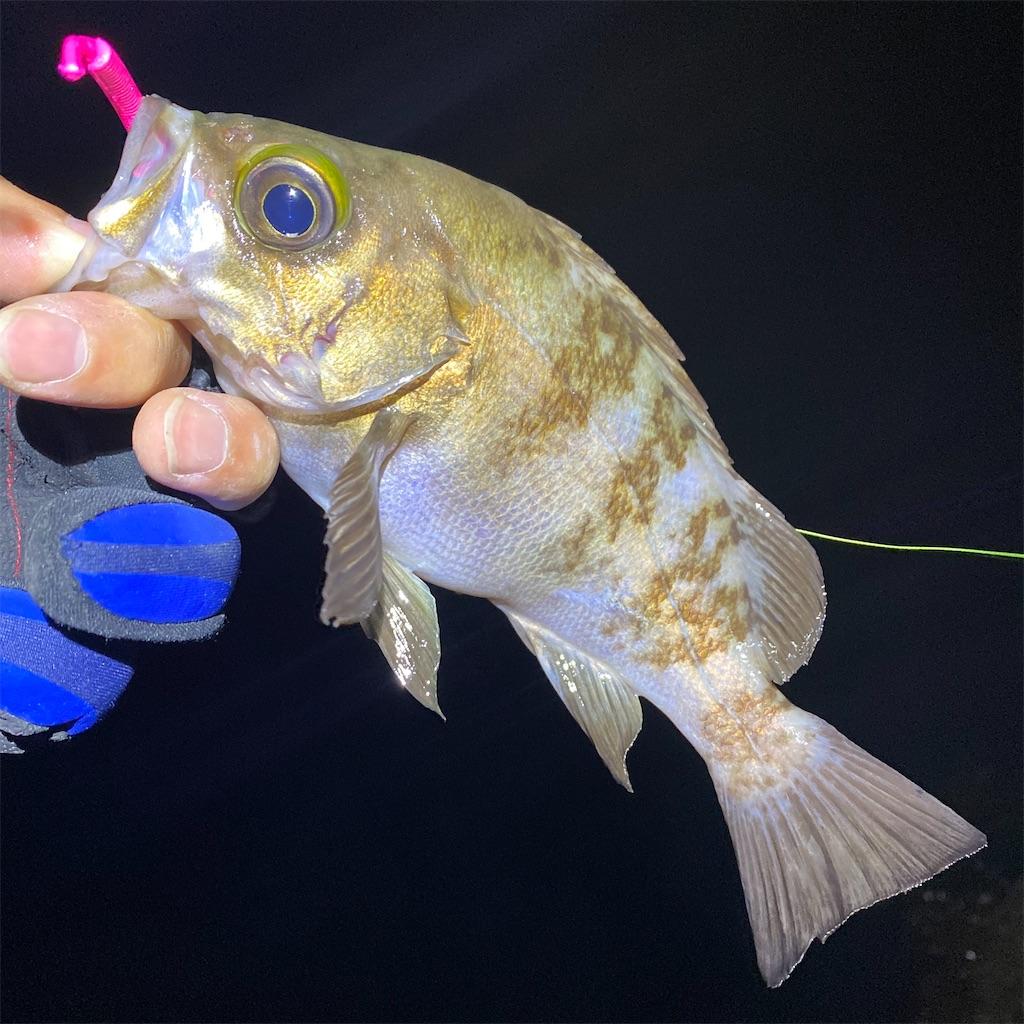 f:id:yu-kin-fishing:20200531101517j:image
