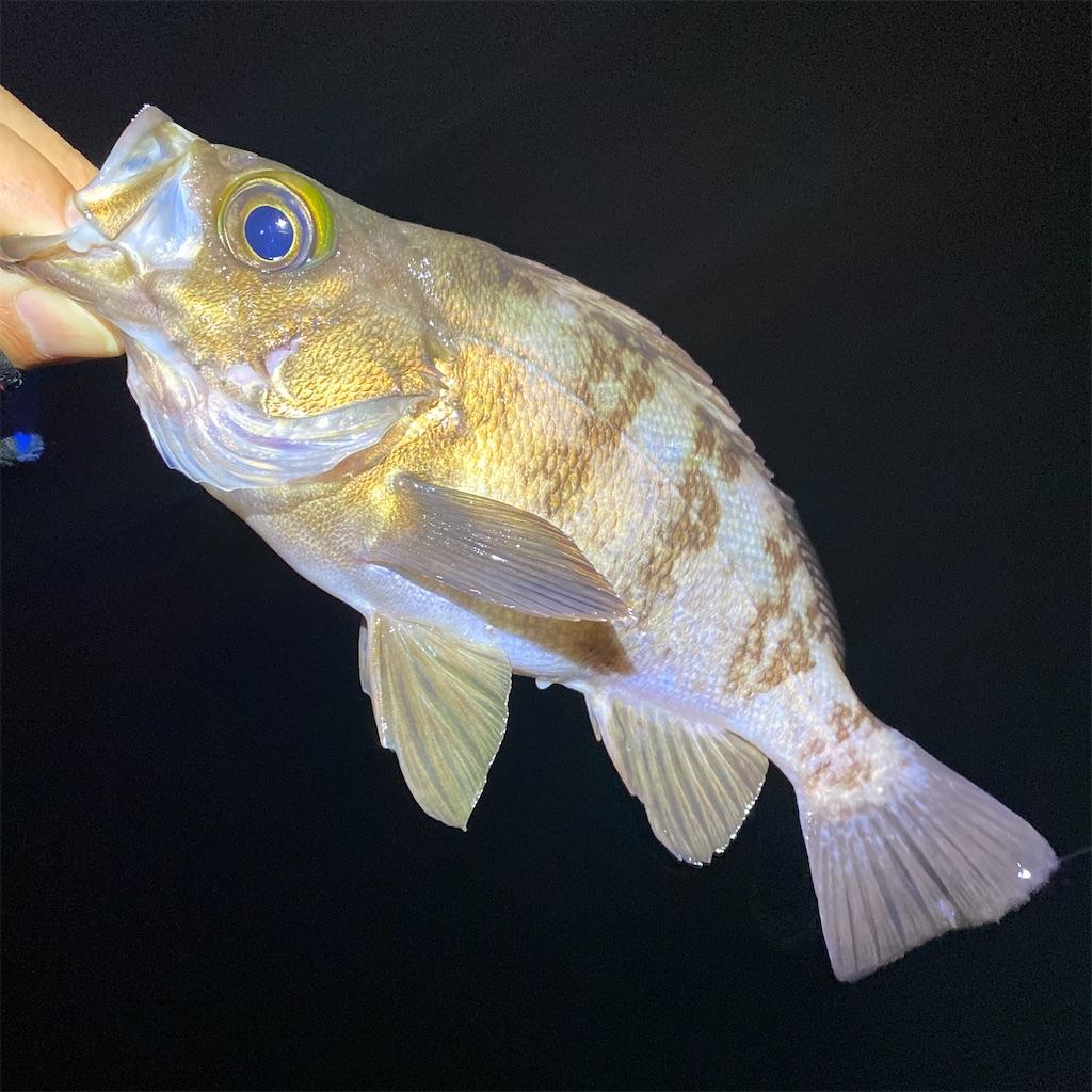 f:id:yu-kin-fishing:20200531101604j:image
