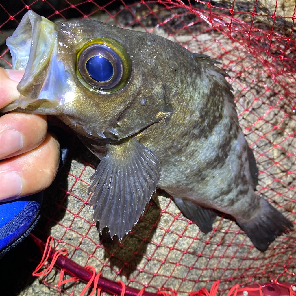 f:id:yu-kin-fishing:20200612233519j:image