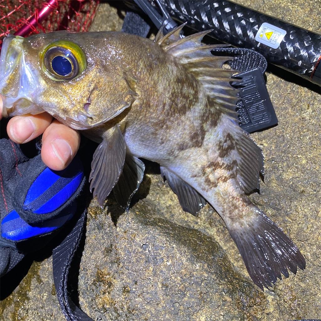 f:id:yu-kin-fishing:20200612234248j:image