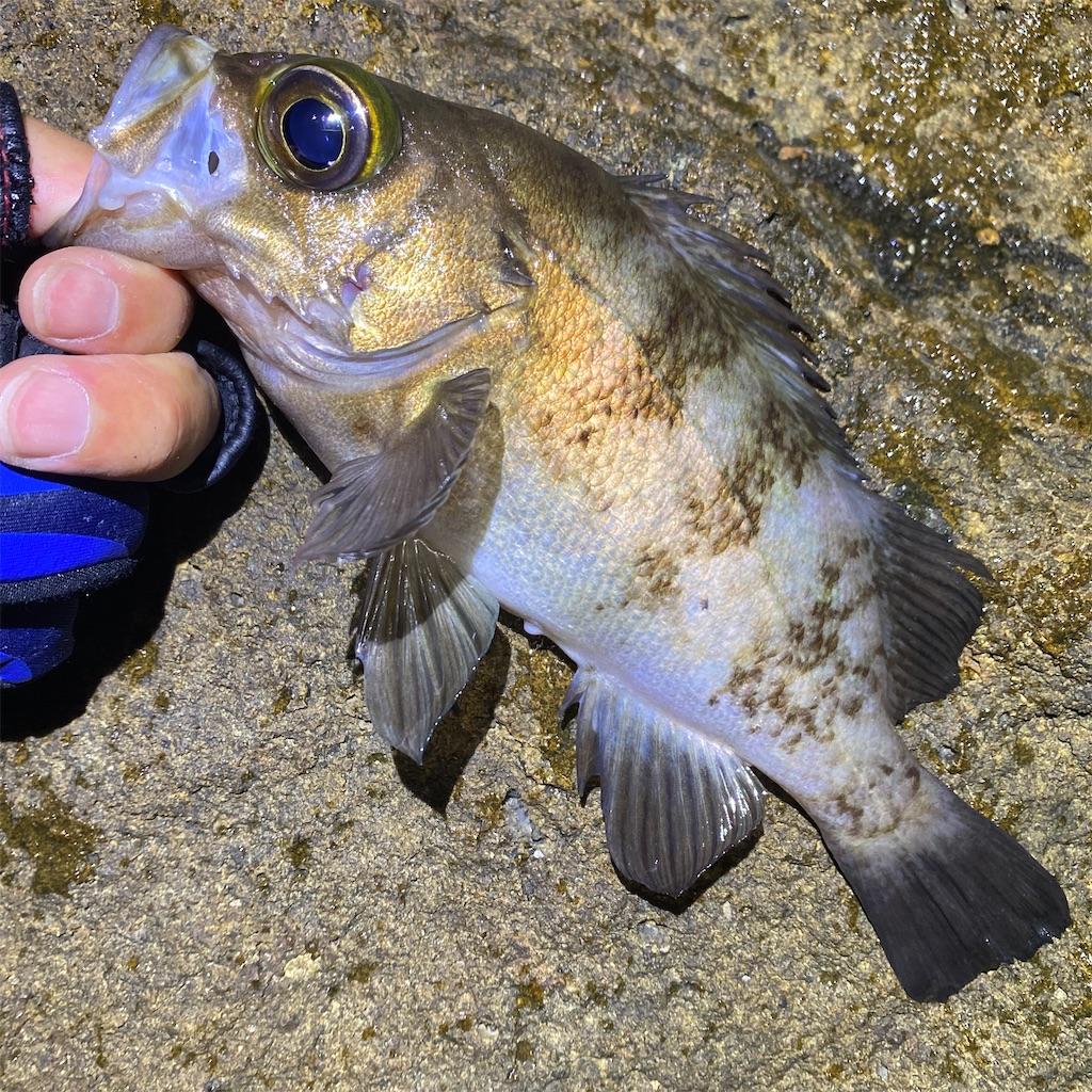 f:id:yu-kin-fishing:20200612234252j:image