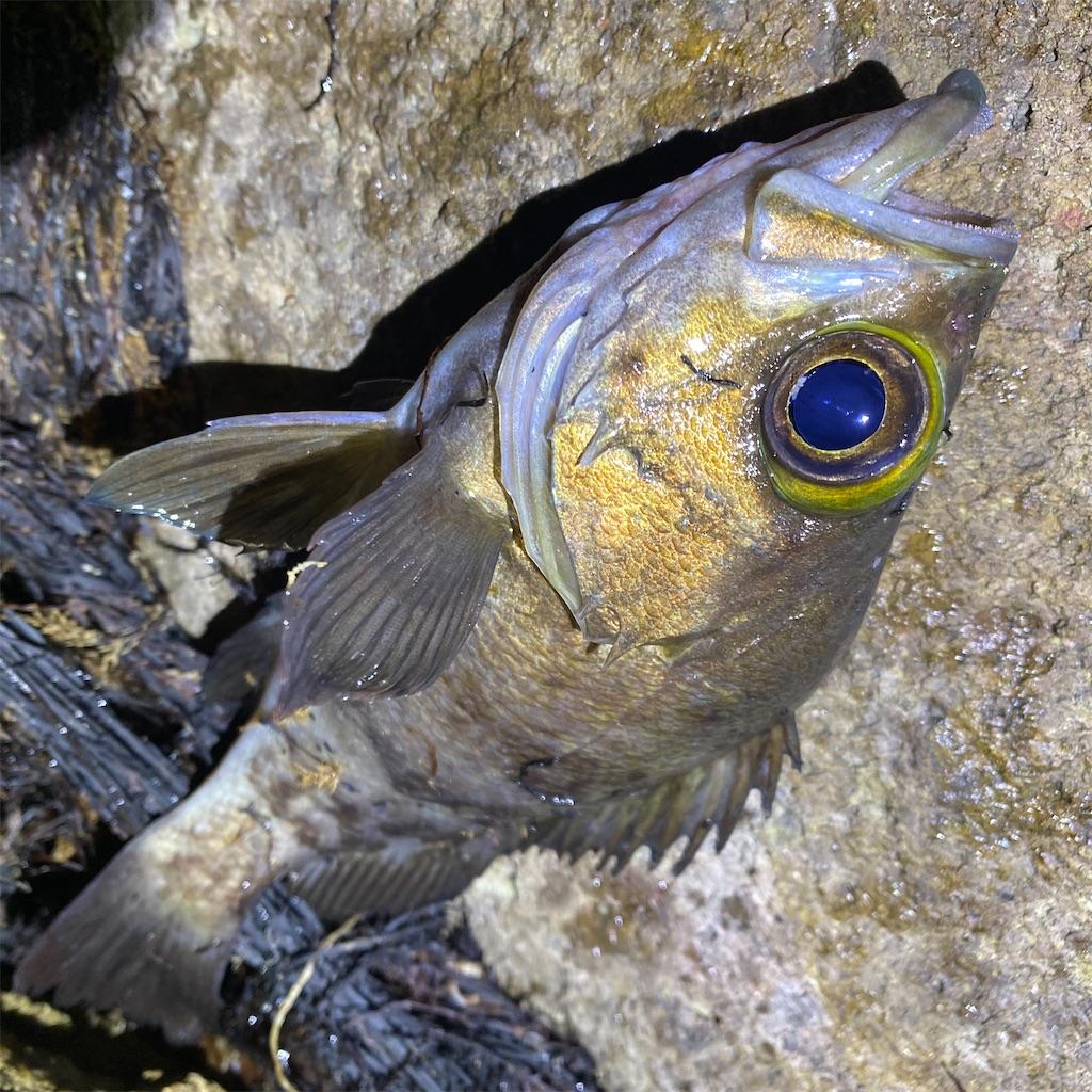 f:id:yu-kin-fishing:20200612234256j:image