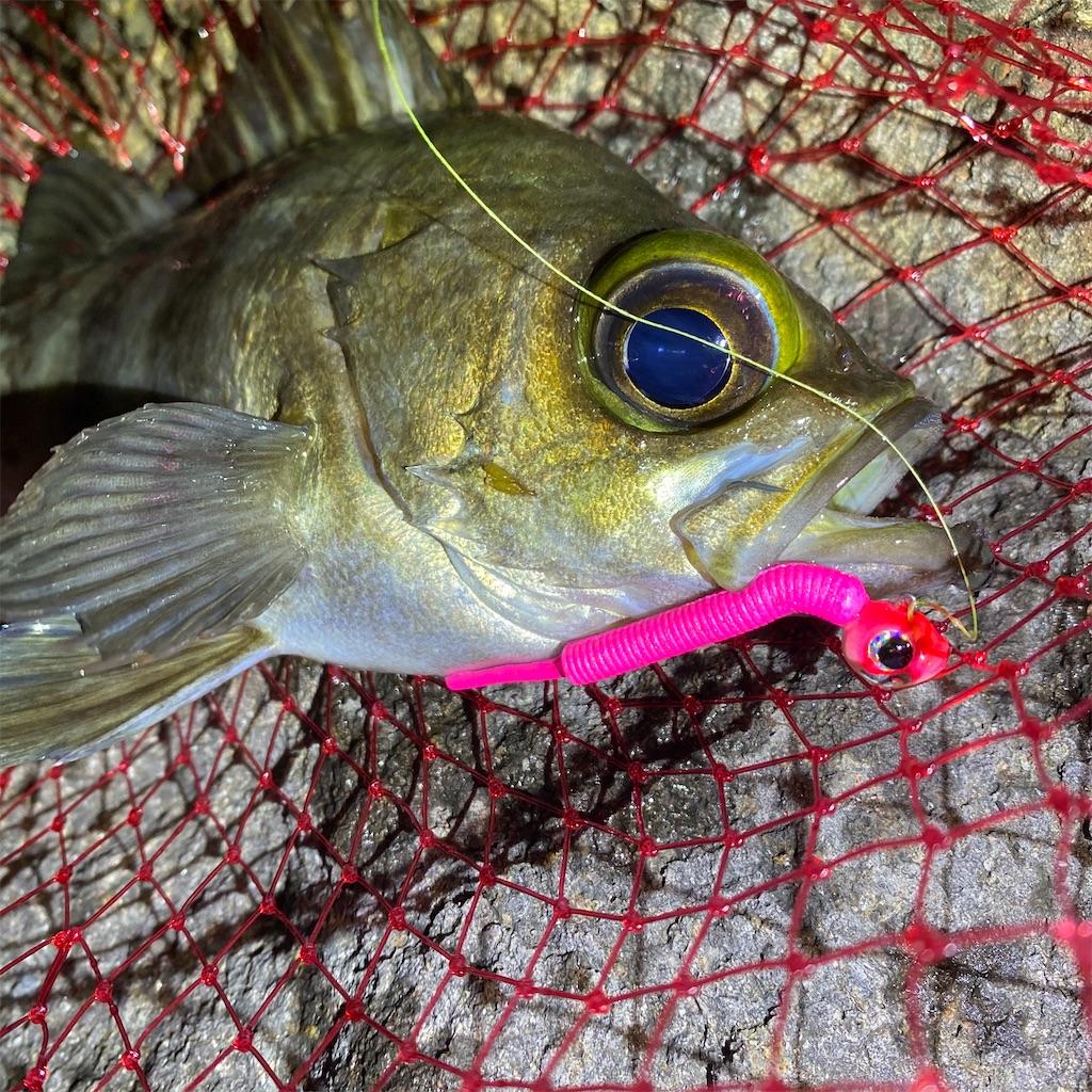 f:id:yu-kin-fishing:20200612234303j:image