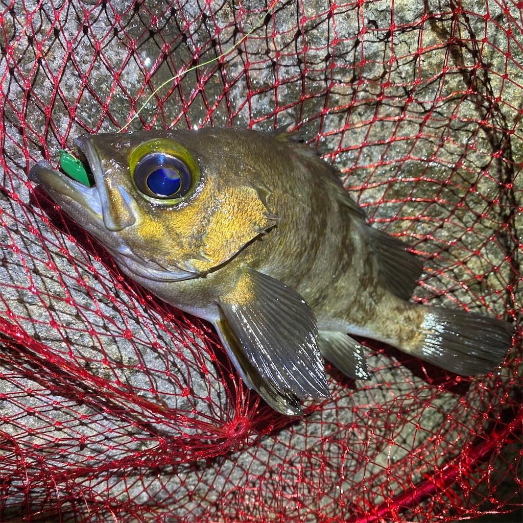 f:id:yu-kin-fishing:20200612234312j:image