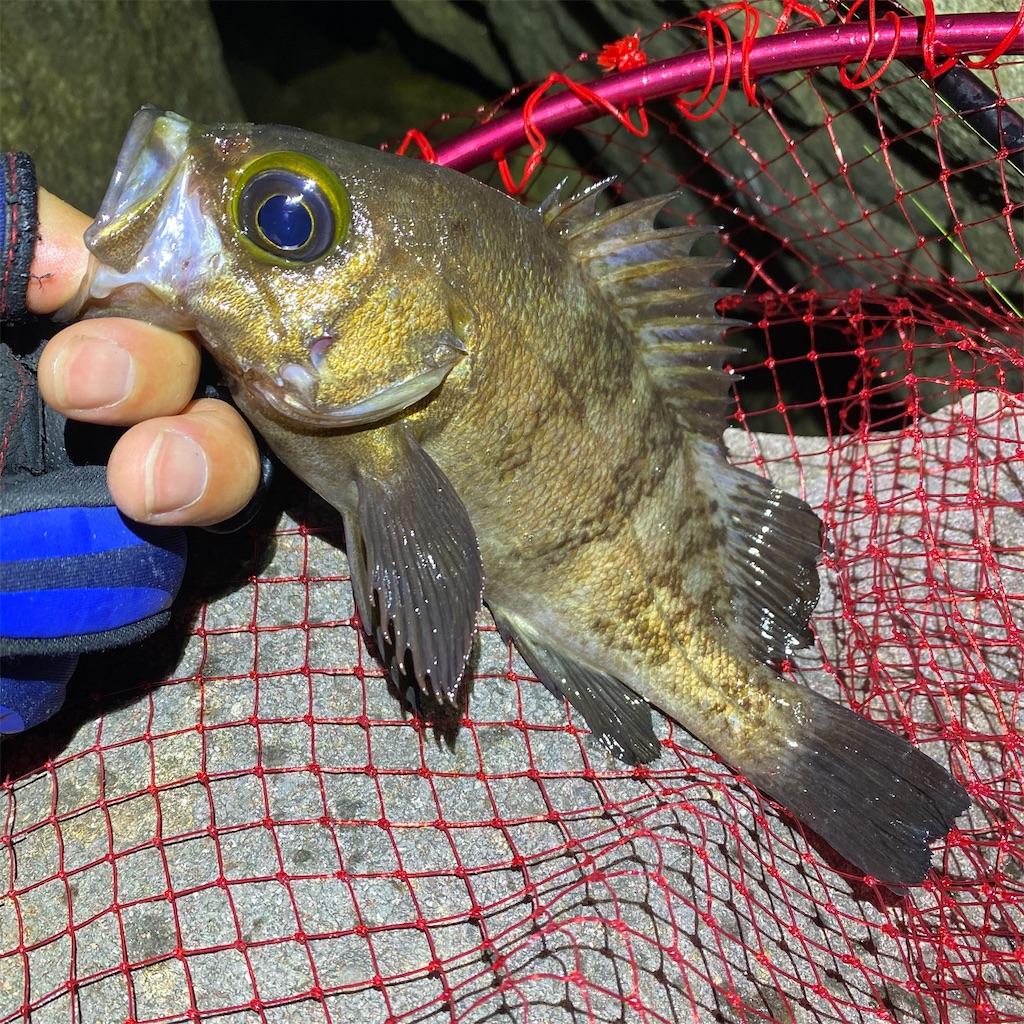 f:id:yu-kin-fishing:20200612234316j:image