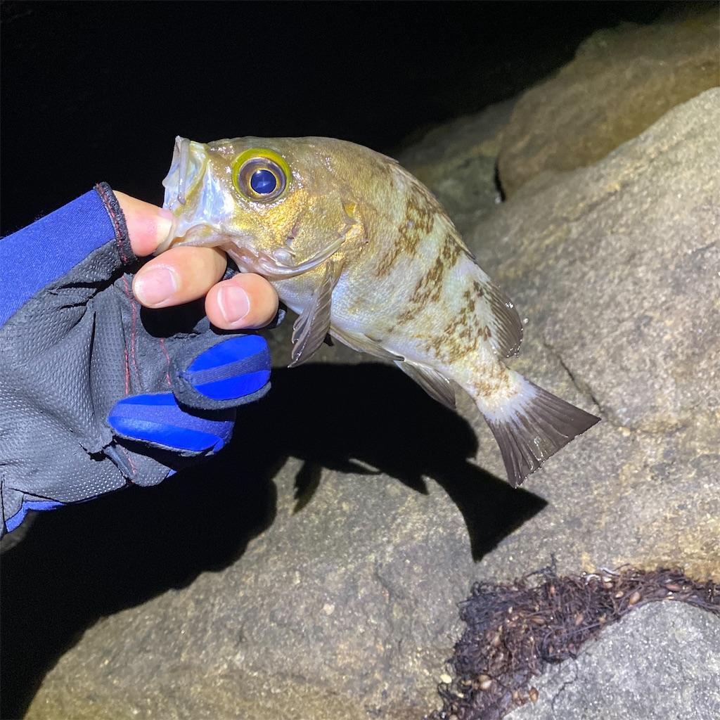 f:id:yu-kin-fishing:20200612234320j:image