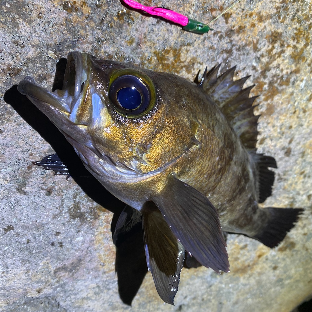 f:id:yu-kin-fishing:20200617085833j:image
