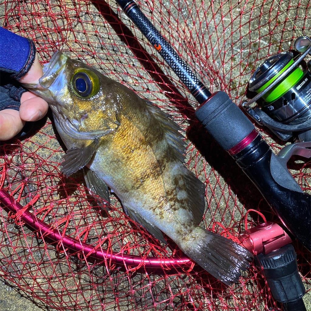 f:id:yu-kin-fishing:20200617090414j:image