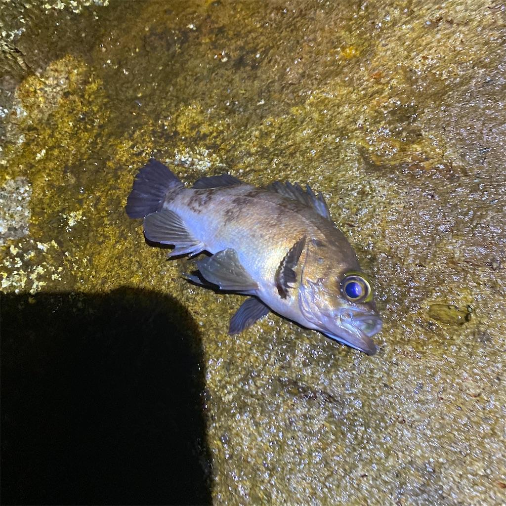 f:id:yu-kin-fishing:20200617090418j:image