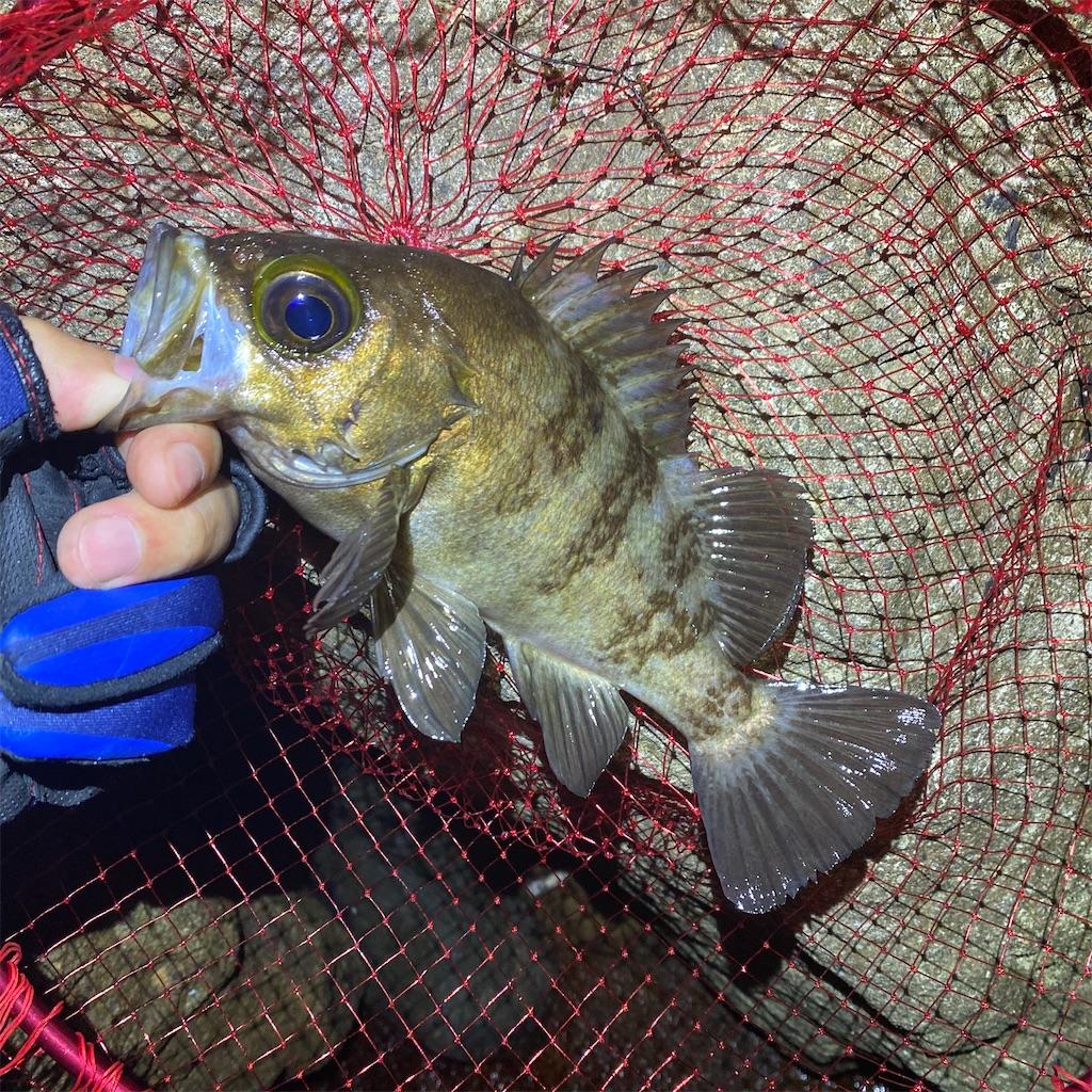 f:id:yu-kin-fishing:20200617091915j:image
