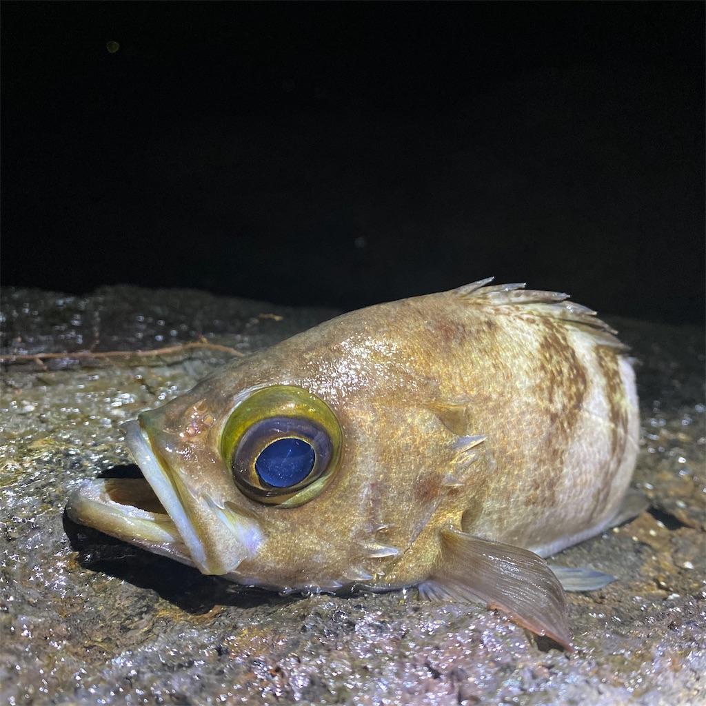 f:id:yu-kin-fishing:20200617092641j:image