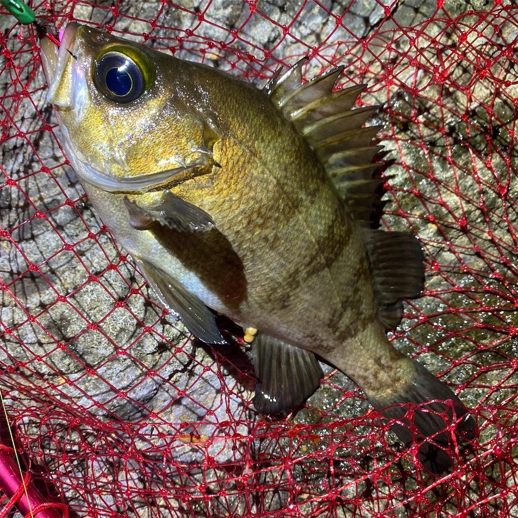 f:id:yu-kin-fishing:20200617092648j:image