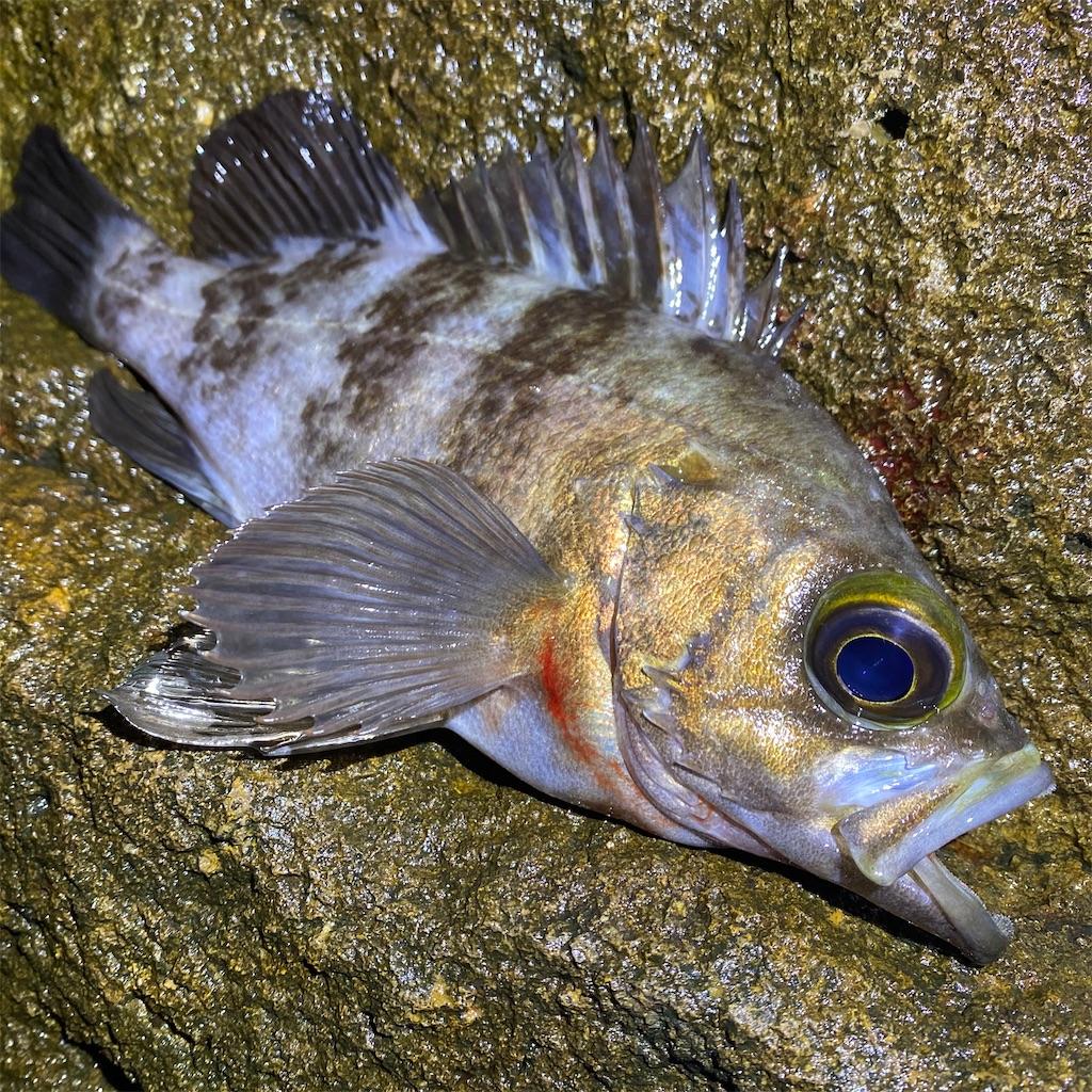 f:id:yu-kin-fishing:20200618235515j:image