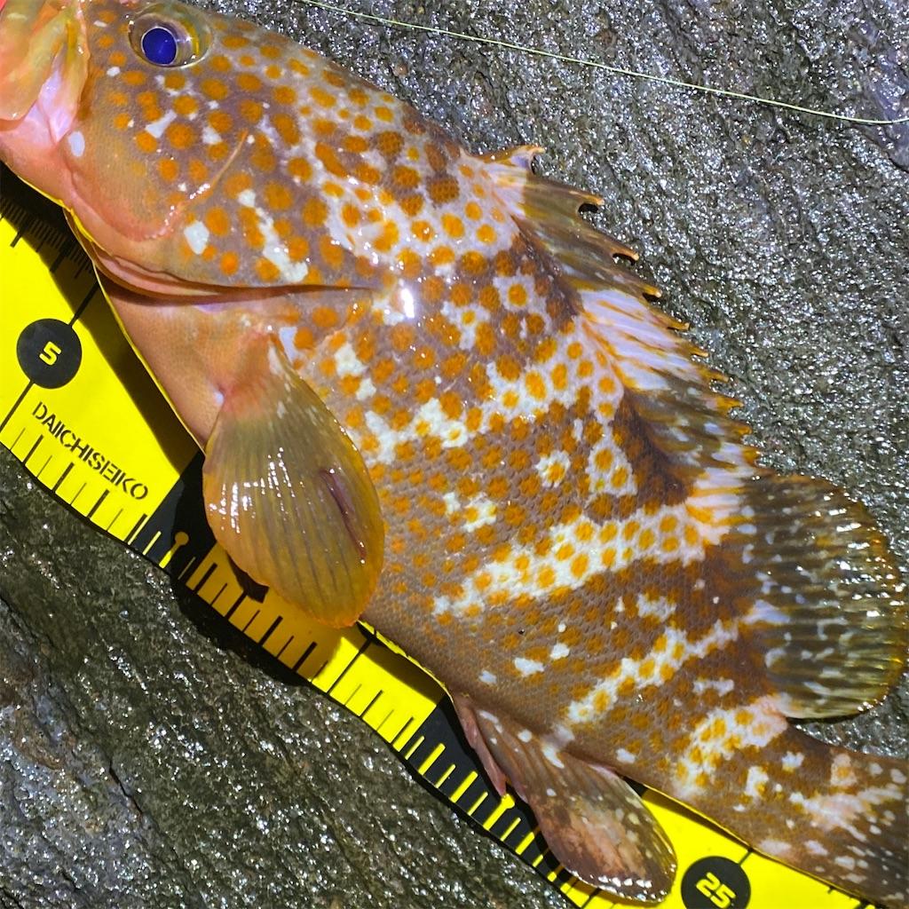 f:id:yu-kin-fishing:20200619001910j:image
