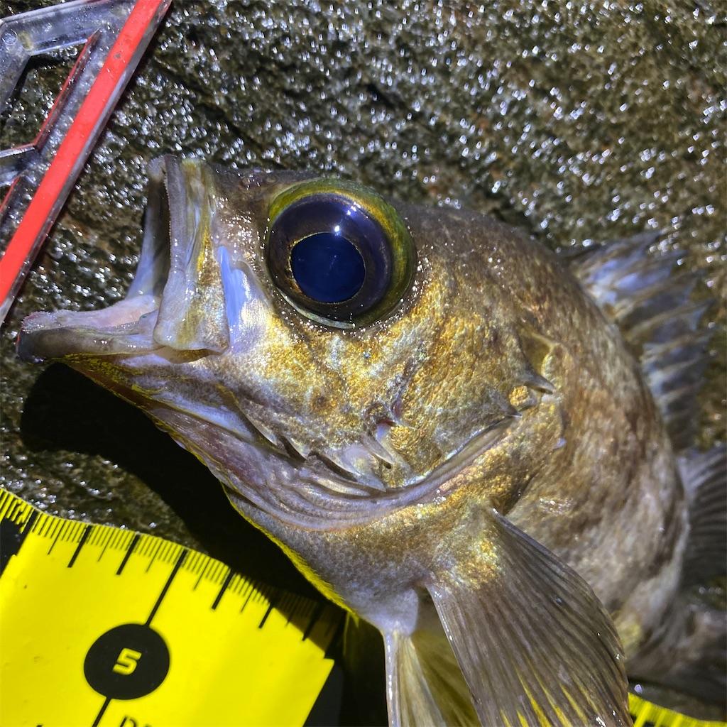 f:id:yu-kin-fishing:20200619002616j:image