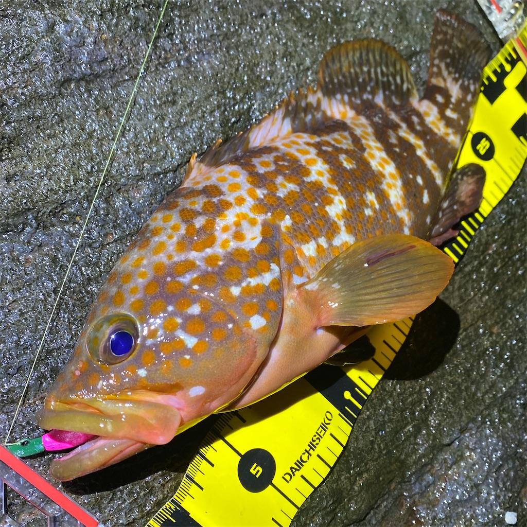 f:id:yu-kin-fishing:20200621132408j:image