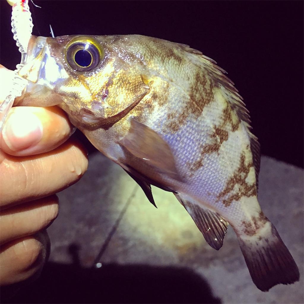 f:id:yu-kin-fishing:20200621133628j:image
