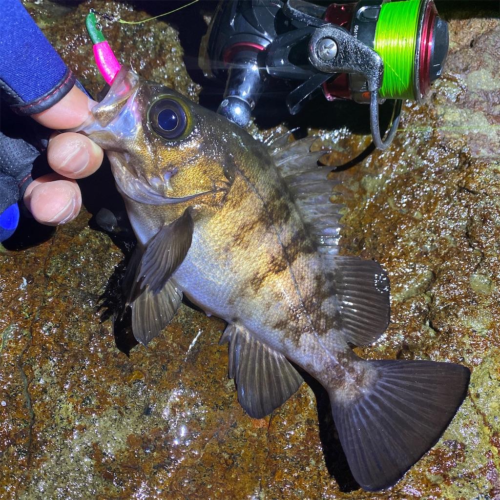 f:id:yu-kin-fishing:20200621134645j:image