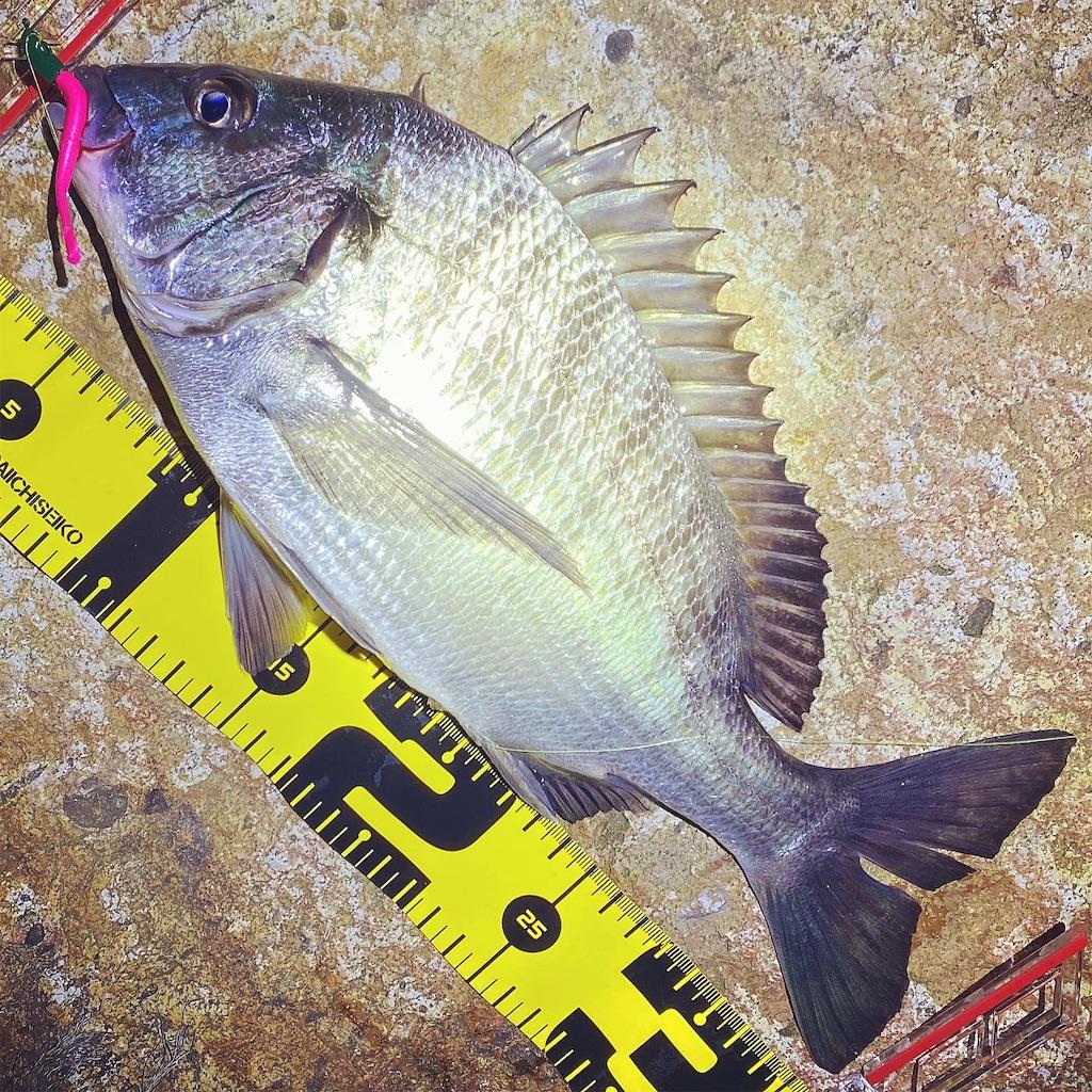 f:id:yu-kin-fishing:20200621134845j:image