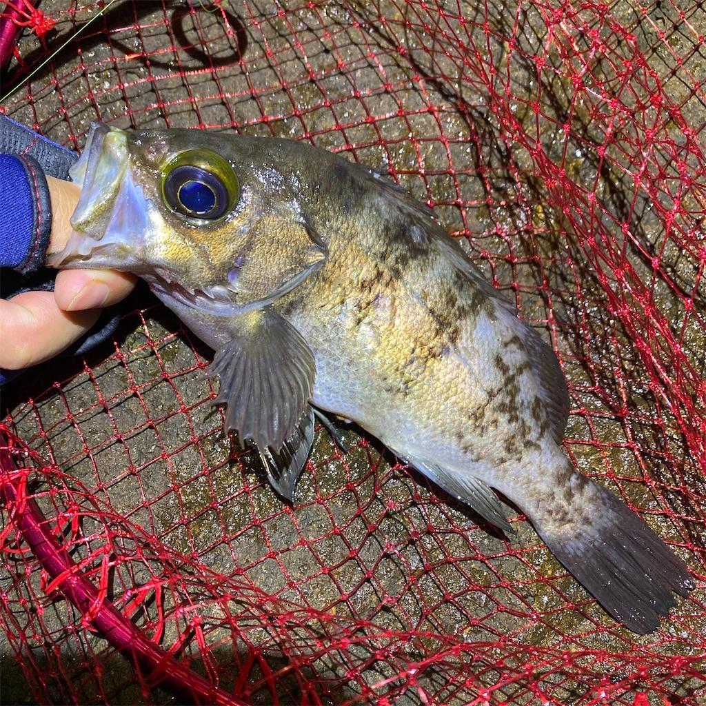 f:id:yu-kin-fishing:20200622185259j:image