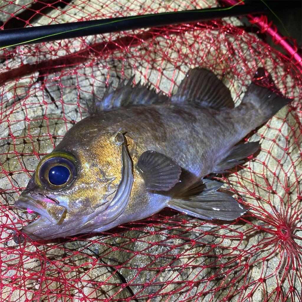 f:id:yu-kin-fishing:20200622193331j:image
