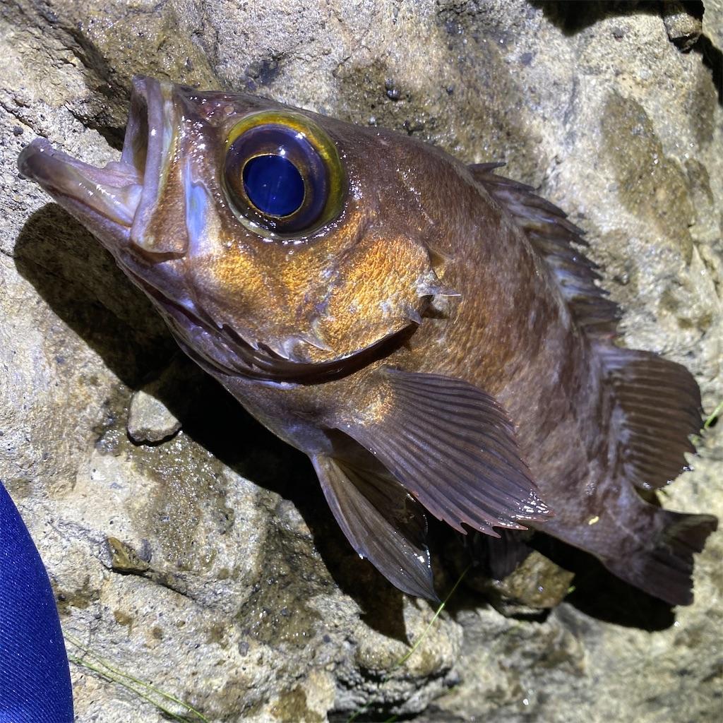 f:id:yu-kin-fishing:20200622193452j:image
