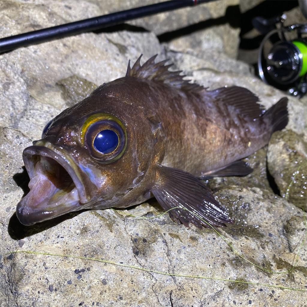 f:id:yu-kin-fishing:20200622193641j:image