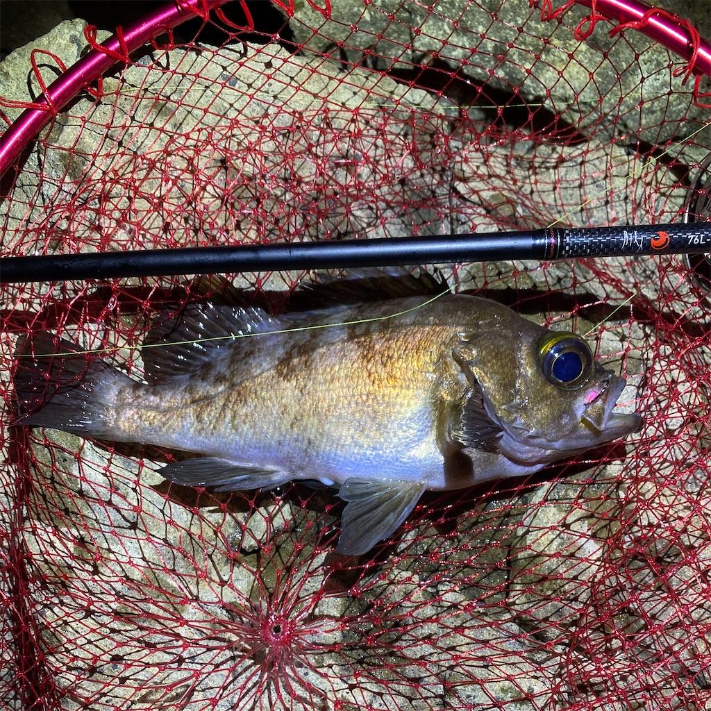 f:id:yu-kin-fishing:20200622200824j:image