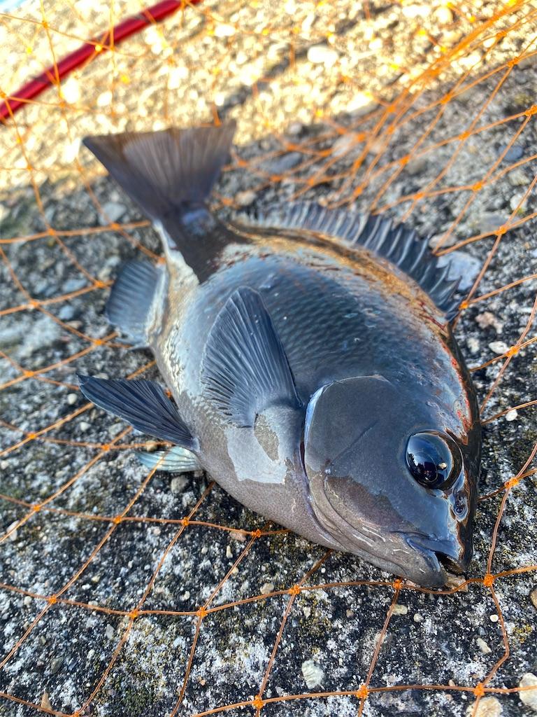 f:id:yu-kin-fishing:20200624200538j:image