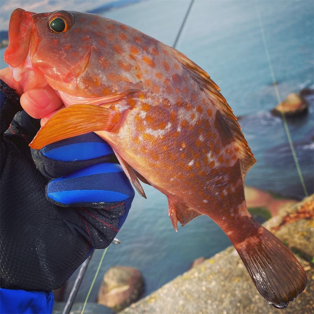 f:id:yu-kin-fishing:20200624200558j:image